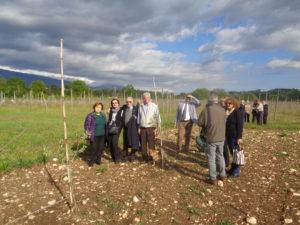 I 100 ulivi messi a dimora nei terreni della Scuola